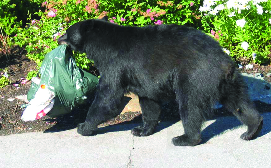 Bear with Trash Metaphorically Improving Medical Staff
